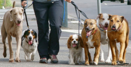 112.dog-walking.jpg (grande)